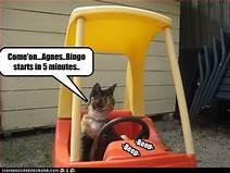 """Cat in gocart saying """"bingo in 5 minutes"""""""