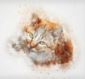 drawing of orange & white cat