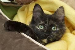 black cat under covers