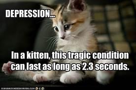 kitten, depressed for 2.3 seconds