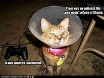 "The ""cone of shame"""