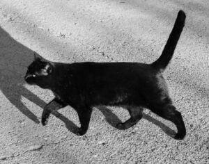 Black cat walking on sidewalk