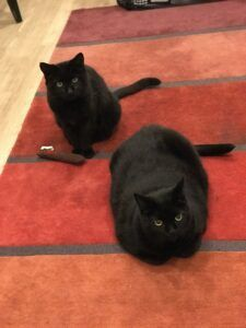 Two black cats sitting on rug
