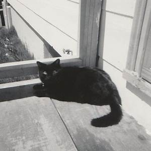 black cat on doorstep