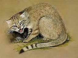 Tan & black African Wildcat snarling