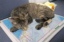 Cat lying on map