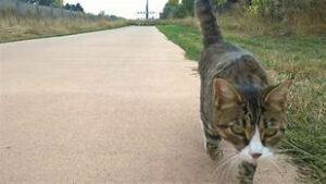Cat walking down road