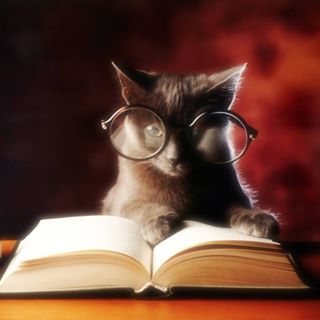 black cat with glasses reading book