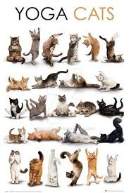 poster of cats in many yoga poses