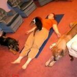 person lying on yoga mat; cat on top; two dogs nearby