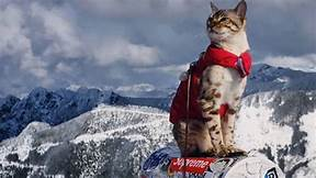 Explorer cat on top of mountains