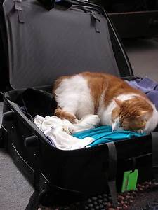 cat sleeping in packed suitcase