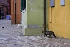 cat stalking bird