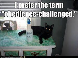 obedience-challenged cat