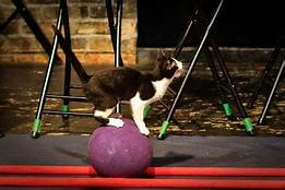 cat standing on large ball