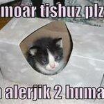 Cat in kleenex box: allergic to humanz