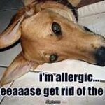 Dog pic: I'm allergic...please get rid of the cat