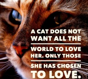 quote about cat love
