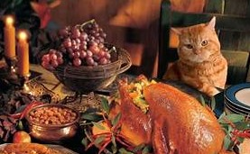 Cat at chair eyeing turkey on table