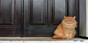 Cat guarding doorway