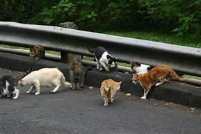 group of cats foraging next to road guardrail.