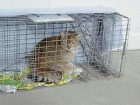 feral cat in cage