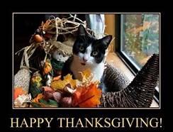 B & W cat in thanksgiving basket