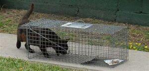 Cat entering a live trap
