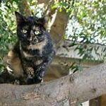 calico cat sitting outside