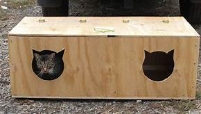 low wooden box, 2 cat-head holes cut in it, for cats to hide