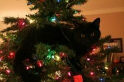 black cat in Christmas tree