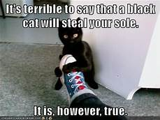 Black cat holding man's shoe