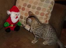 Cat batting toy santa