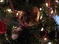 Cat looking out of Christmas tree