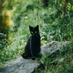 black cat outside sitting on board