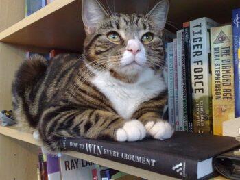 Cat reclining on books