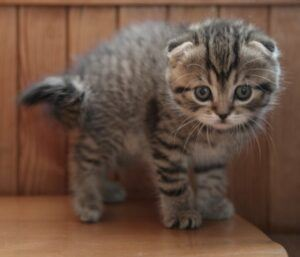 cute striped kitten