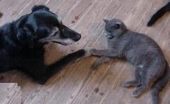 Senior dog and cat holding paws