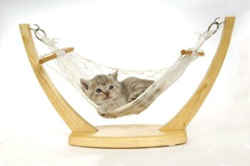 small cat in hammock
