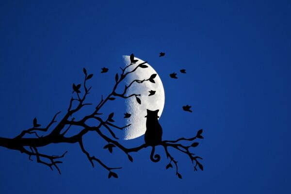 silhouette: cat on branch and moon