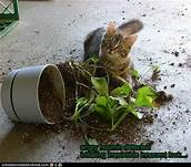 cat with knocked-over planter