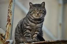 Tiger cat sitting up