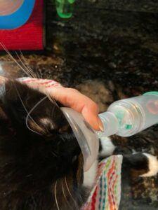 cat using asthma inhaler