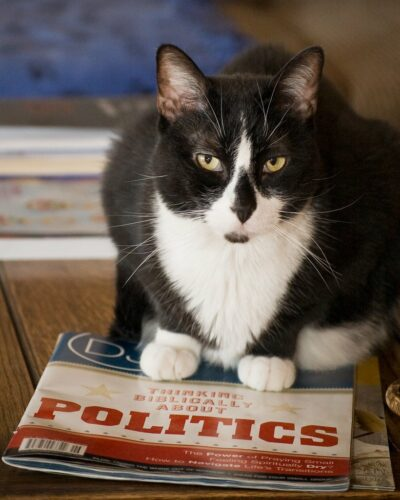"Cat sitting on ""Politics"" magazine"