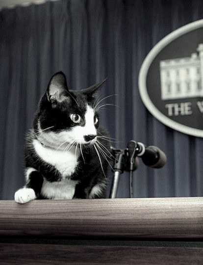 cat at podium next to mics