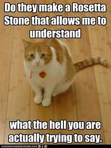 cat sitting: Do they make a Rosetta Stone that allows me to understand what the hell you are actually trying to say