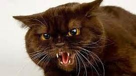 cat with mouth open, teeth bared