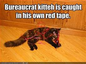 Cat wound up in red tape