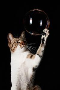 cat catching bubble