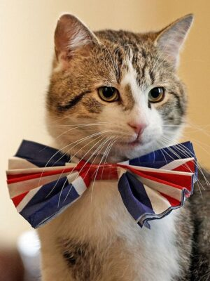seated cat with red,white,and blue bowtie